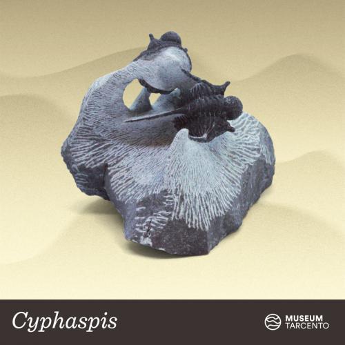 Cyphaspis_Siluriano-Devoniano